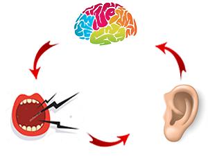 פה אוזן מוח שמיעה